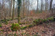 Die Baumbank gehört wieder vollständig zur Natur.