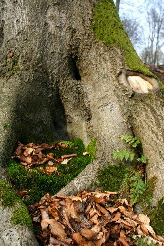 Eine verwunschene kleine Höhle für Gnome und sonstige Erdgeister.