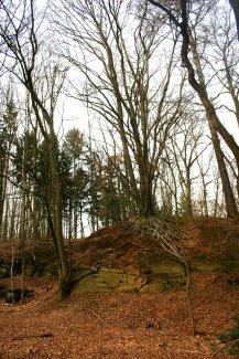 Erhabene alte Bäume.
