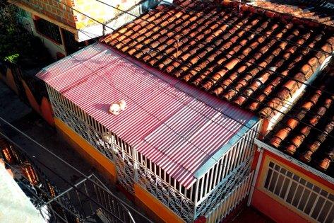 Diese Katze macht es sich in der Morgensonne auf dem warmen Dach gemütlich.