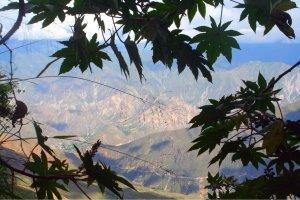 Perfekt eingerahmt schimmern die Berge durch die Blätter.