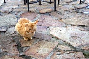 Diese ginger cat - Straßenstreunerkatze leistete uns Gesellschaft beim Mittagessen.