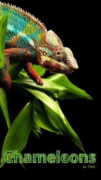 Chameleons as Pets
