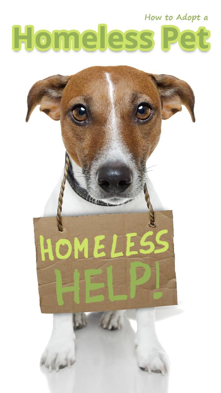 How to Adopt a Homeless Pet