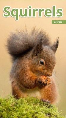 Squirrels as Pets