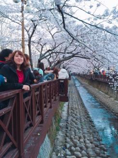 Todas las estaciones son bien marcadas en Corea, pero la primavera se lleva todos los premios.