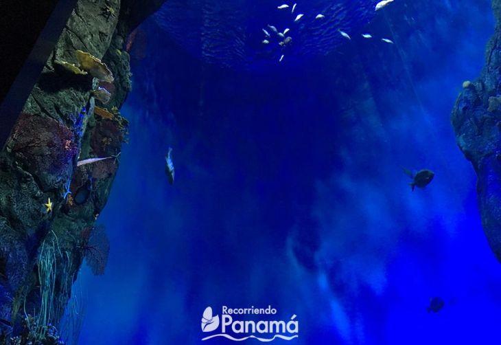Atlantic Ocean at Biomuseo of Panama