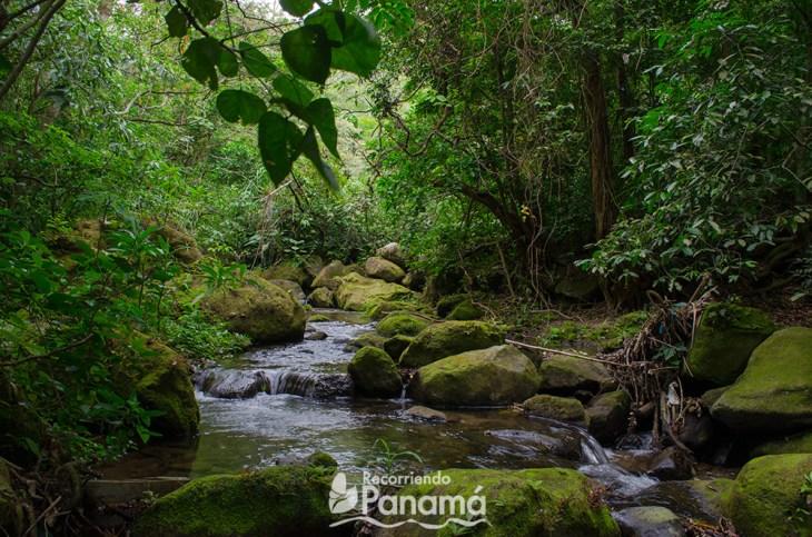 Rio del sendero de los árboles cuadrados