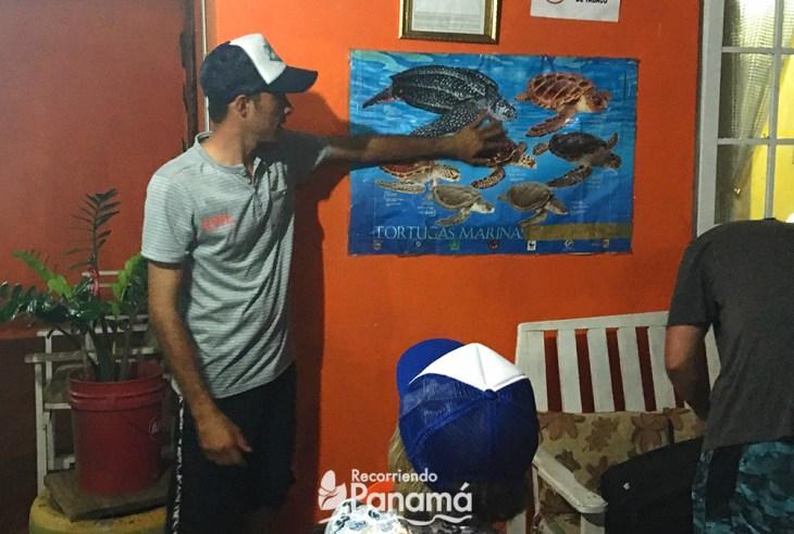 Daniel explaining sea turtles