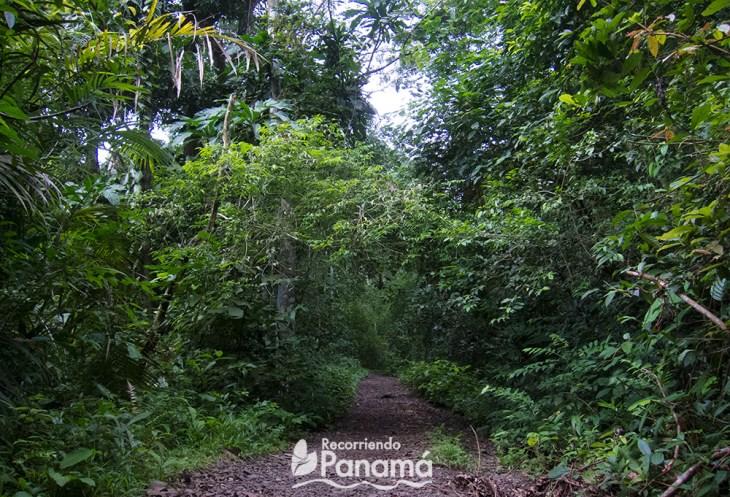 Plantación Trail
