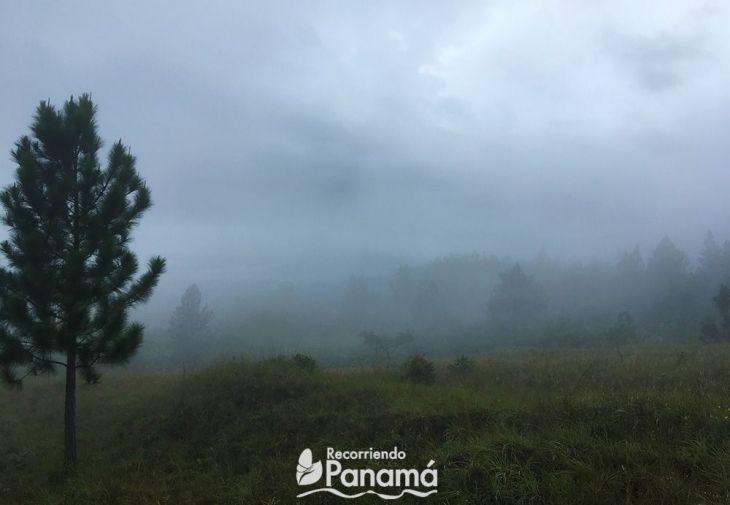 La neblina se puso más espesa.