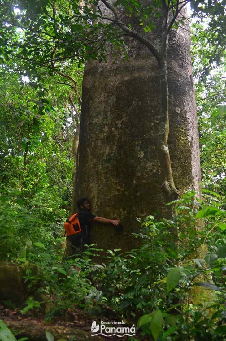 abrazando un árbol.
