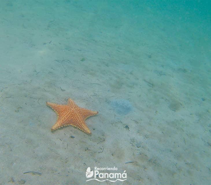 Estrellas Beach.