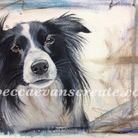 'Betsy'collie dog in watercolour and pastel