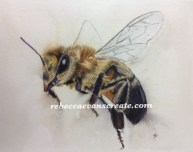 'All in a days work' honey bee in charcoal and watercolour, 200lb cold press 30x40 cm