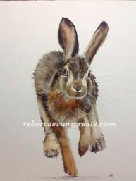 'Leveret' 30x40 cm watercolour on 200lb cold press