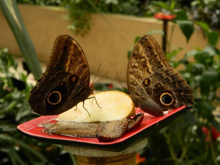 on a teste le jardin aux papillons a vannes recreatiloups