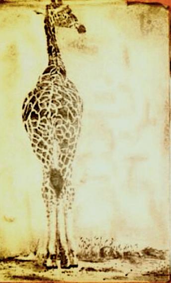 giraffe-drawing