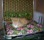 kitty_bed.JPG