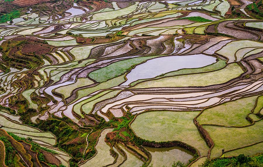 Campos de Arroz Chinos