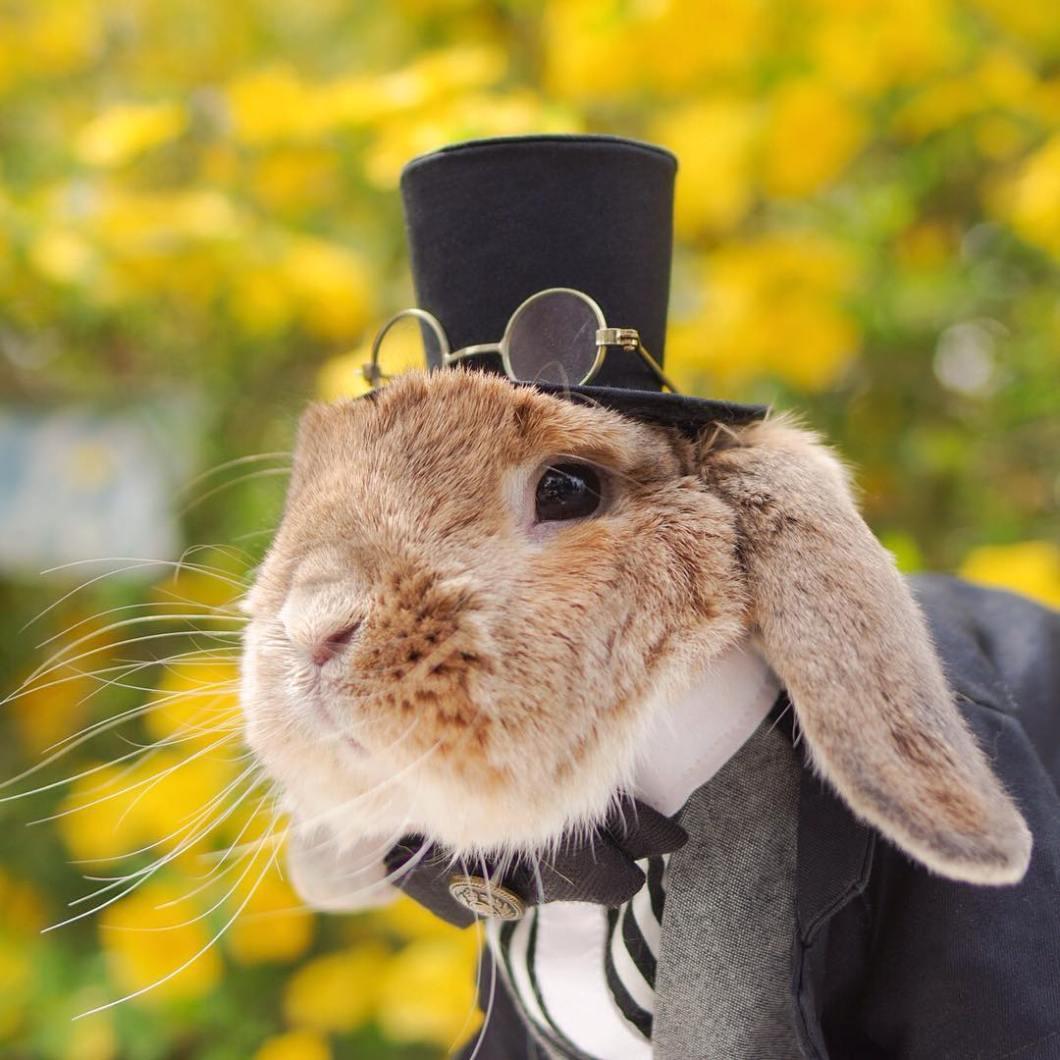 Conejo Pui señor