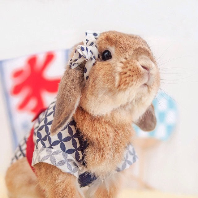 Conejo pui femenino