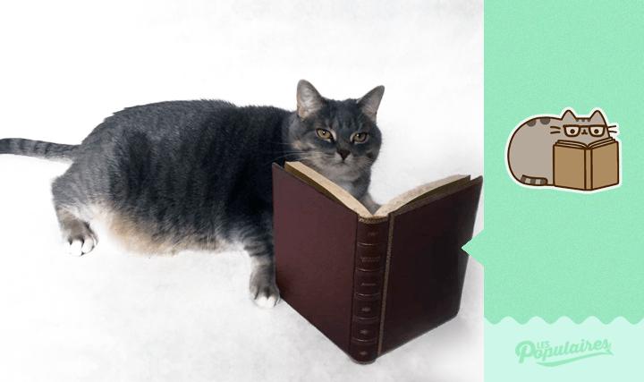 Hombre recrea los stickers de Pusheen Cat con su gato -3