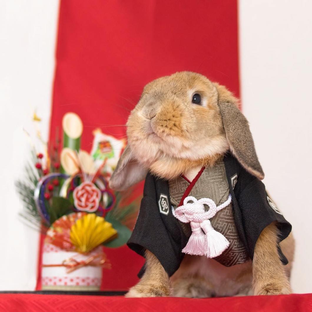 conejo Pui japones