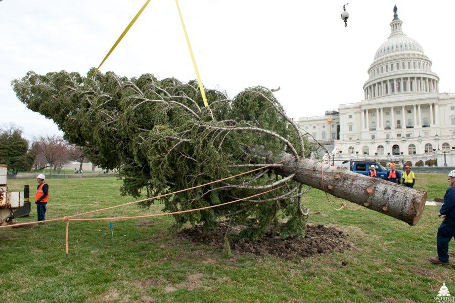 tala de árbol