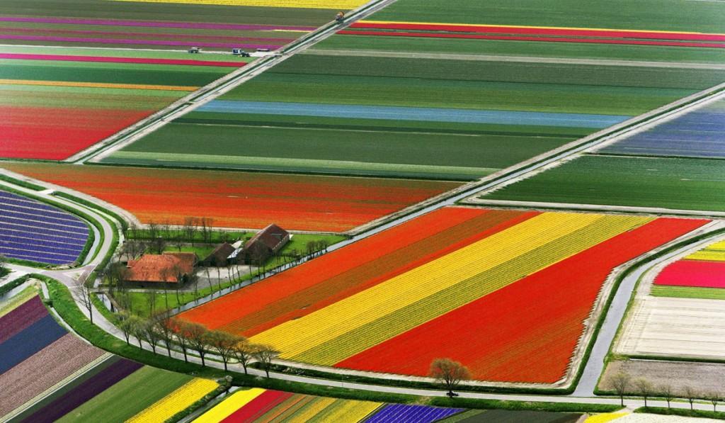 Tulipanes Holanda Paises Bajos