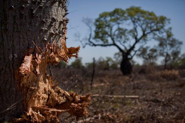 Deforestacion4
