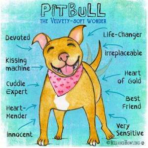 PitBull: The Velvety-Soft Wonder