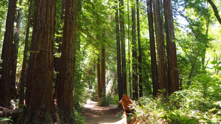 Exploring the Detour: Santa Cruz & the Redwoods