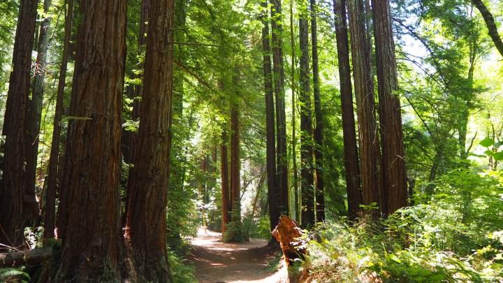 Exploring the Detour: Santa Cruz & the Redwoods