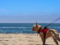 Rosie at the beach!