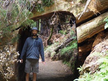 tunnel through a tree!