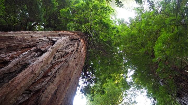 Northern California part 2: Big Waves & Even Bigger Trees