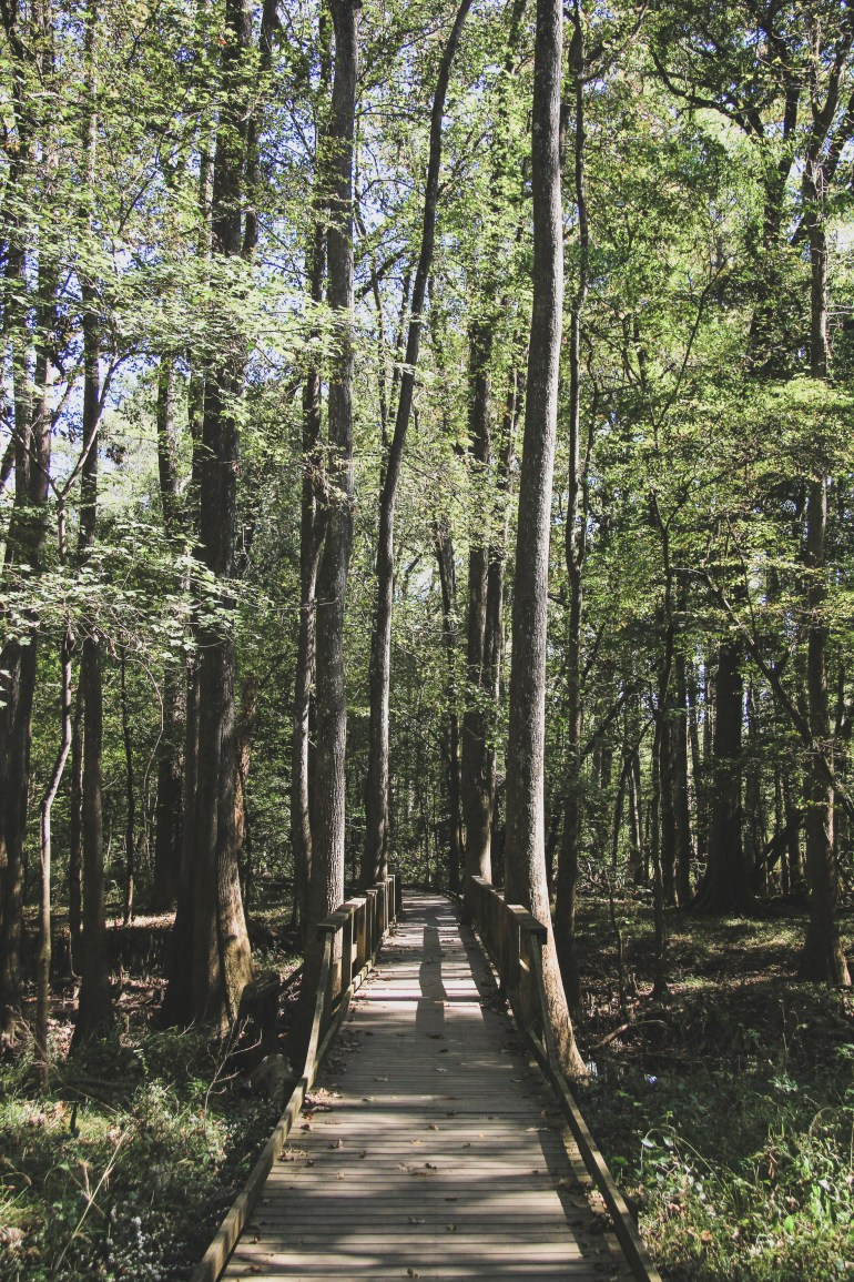 hiking in congaree national park