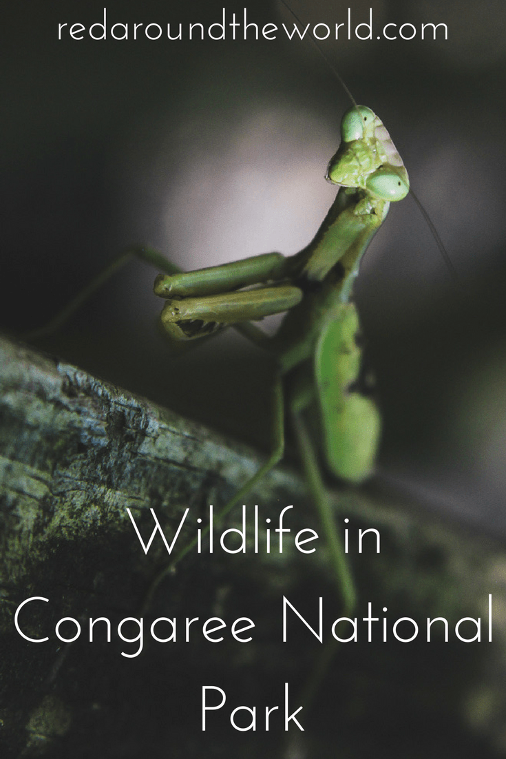 Wildlife in Congaree National Park
