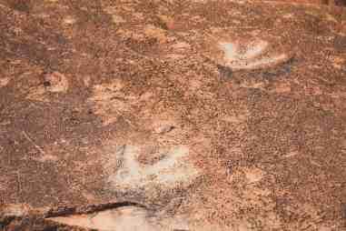 Potash Road Moab dinosaur tracks