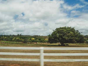 farm on oahu hawaii