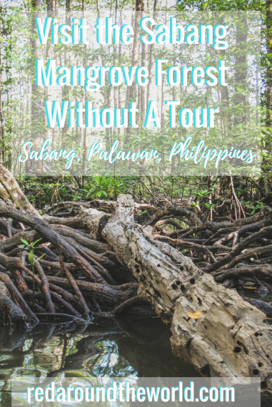 Visit the Sabang Mangrove Forest Without A Tour