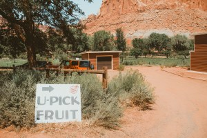Capitol Reef apple orchard