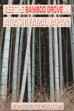 The Arashiyama Bamboo Grove is one of the best things to do if you're visiting Kyoto. The bamboo grove makes a great day trip from Kyoto any time of year.