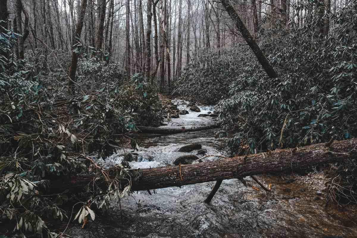 Rocky Fork State Park: A Tennessee Hidden Gem