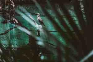 bird watching at blue spring state park florida