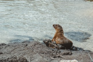 sea lion and iguana galapagos islands Las Tintoreras