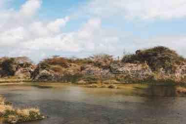 flamingo lagoon puerto vilamil galapagos islands