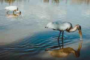 everglades national park birds
