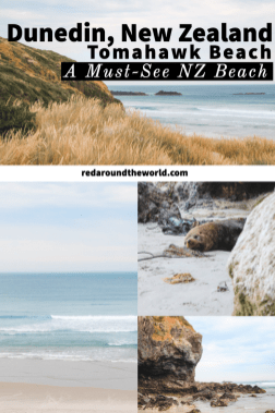 Tomahawk Beach in Dunedin is a great place to relax away from the bustling city life. It's on the coast just ten minutes from Dunedin in the Otago region. Tomahawk beach dunedin | Dunedin New Zealand | Beaches in new zealand | new zealand beaches | dunedin beaches | New Zealand vacation | New Zealand things to do | New Zealand road trip | new zealand south island road trip